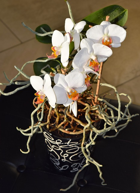 Can you cut the air roots of an orchid