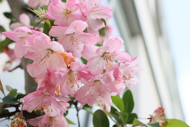 indoor plants with pink flowers