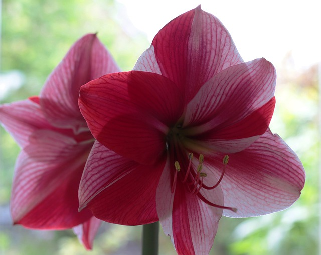 pink flower houseplant