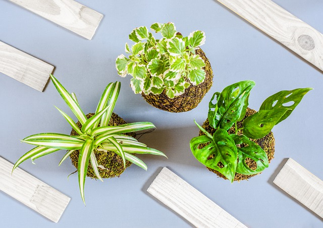 do spider plants purify the air