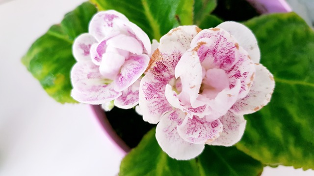 plants that have pink flowers