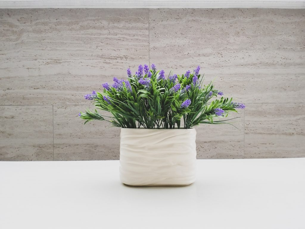 best house plants for bathroom smells