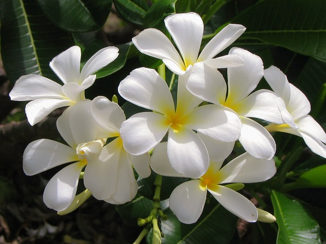 plants for removing bad odors
