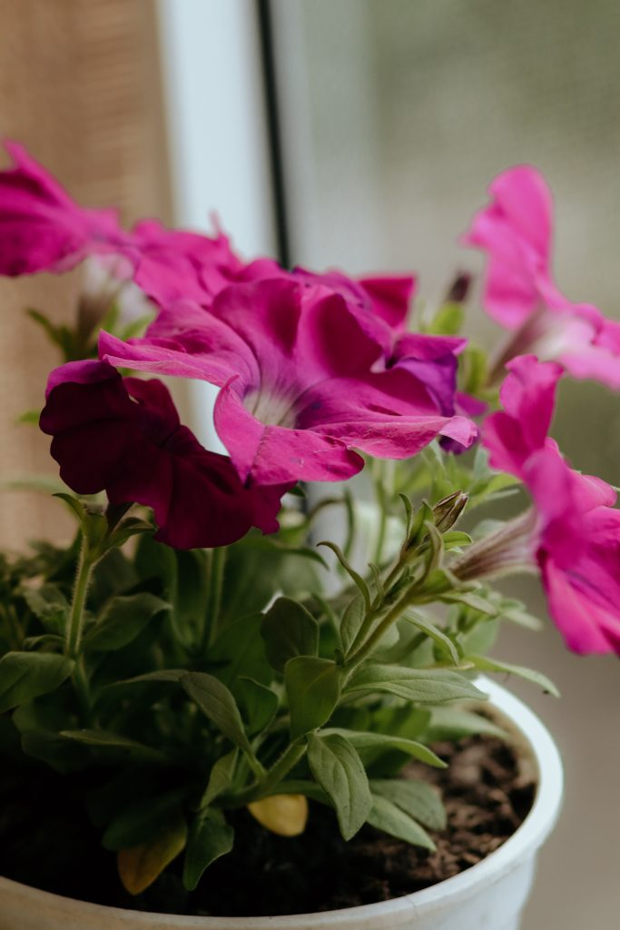 houseplants for bad smells