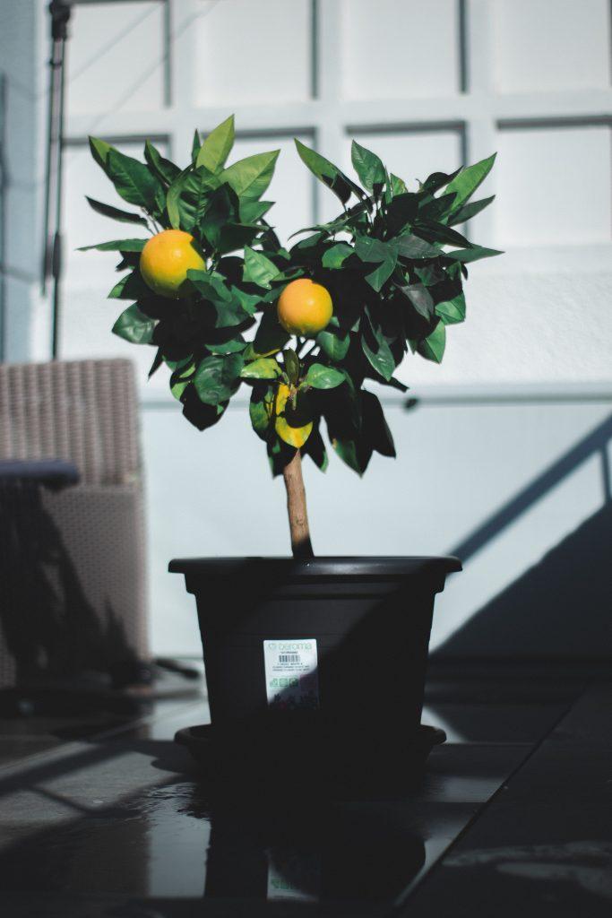 best plants for bathroom smells